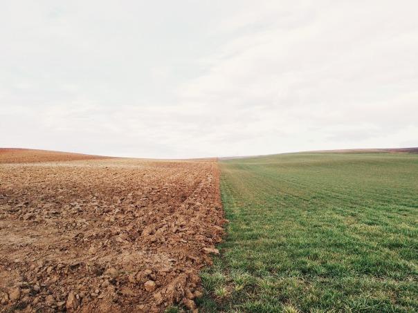 farmland-801817_1920